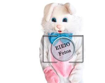 Bunny -  Easter Bunny - Kneeling Bunny -  Photography Prop - Digital Prop - PNG Download - 300 Res - PNG File - Intstant Download