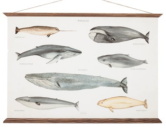 LARGE A1 Whales Canvas Poster - vintage illustration educational chart - sea animal watercolor painting art print  WAP2001