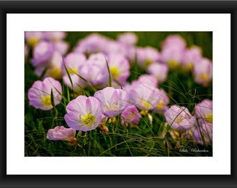 A Fine Art Print of Beautiful Lilac Colored Flowers, Purple, Spring, Texas, Photograph