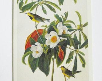 Paruline de découpage bricolage alimentation Audubon oiseau Image Bachman Destash découpage papier éphémères carterie scrapbooking fournitures