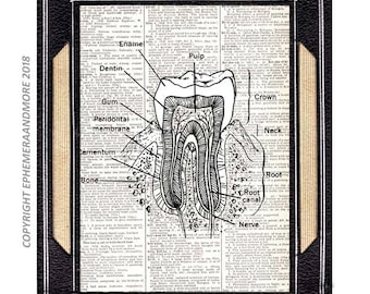 Anatomical TOOTH illustration art print wall decor human anatomy dental dentist oral health vintage dictionary book page black white 8x10