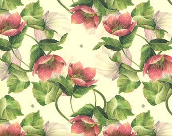 Winter Rose, Lenz rose - wrapping paper