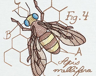 Honey bee diagram wiring diagram bee diagram etsy honey bee diergram of honey bee diagram ccuart Image collections
