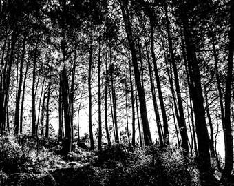 Trees (Photography Print)