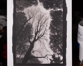 Platinum/Palladium Print: Among the Living, 8x12
