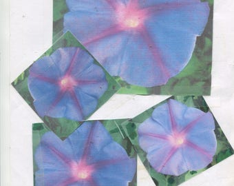 20-Purple - ipomoea nil - morning glory seeds ... pink thorat ... easy grown ...ready for 2018 spring planting ...check-out free seeds ...