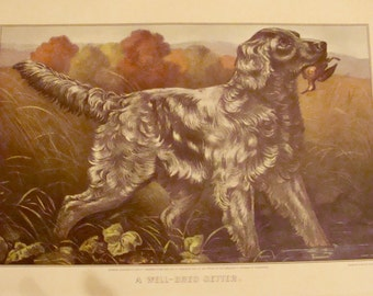 "Vintage Currier&Ives Print ""A Well-Bred Setter"" Pedigree Dog Color Lithograph"