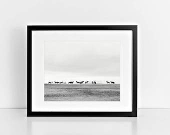Horse Photography in Black and White | Icelandic Art | Equestrian, PHYSICAL PRINT