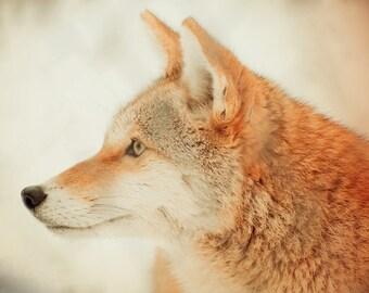Coyote - Digital Photography, Wildlife Photography, Coyote Decor, Coyote Art, Animal Photography, Neutral Animal Decor, Dreamy Photo, Nature