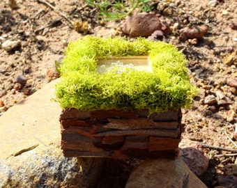 Bark and Moss Covered Trinket Box-'All Mixed Up'