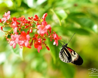 Nature Photography Print, Landscape Photo, Nature Wall Art, Red Green Gold, Butterfly Photograph, Outdoor Picture