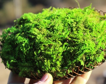 Preserved fern moss Dish Garden-Preserved Moss centerpiece-Rustic metal and moss