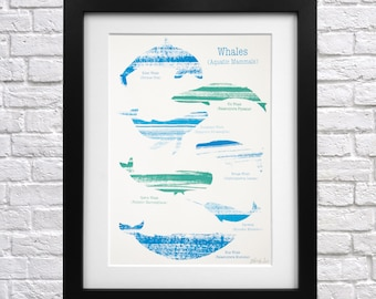 Whale Screen Print - animal print - whale picture - whale wall art - whale lover - educational poster - whale illustration - narwhal