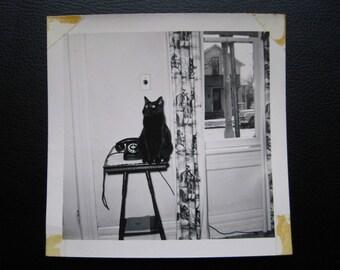 Phone the Kitty... 1950s Vintage Photo... Original Vintage Snapshot Photograph