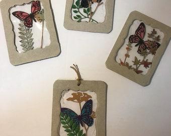 Cruelty free specimens -set of 4 assorted