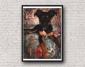 A4 Kelpie Dog Photographic Art Print
