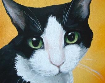 8x10 size canvas custom painted pet portrait sample 8x10 size canvas by Amy Jorge