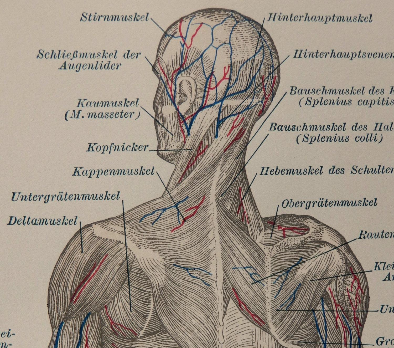 Nett Kopfnickers Galerie - Anatomie Von Menschlichen Körperbildern ...