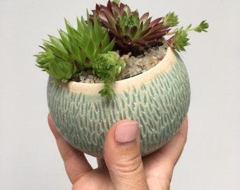 Wobble pot, planted up with sempervivum