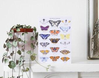 British Butterflies Greetings Card - Butterfly Card - British Nature Print - Butterfly Print - Botanical Art - Butterfly Illustration - A6