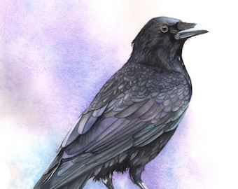 Crow print of watercolour painting A4 size medium print C4715 wall art print - bird art print