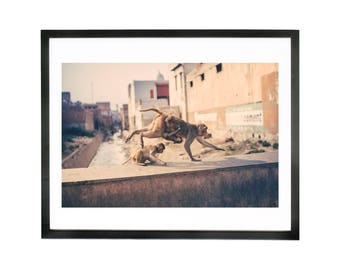 Wall Art, photograph of macaques in Agra, India Print