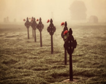 cemetery markers military veterans Remembrance Day red flowers fog, mist fine art photography home decor