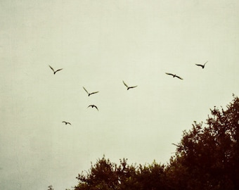trees, flying, birds, nature, fine art photography