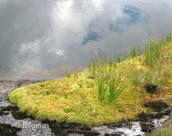 Flora Norway, Flora Lofoten, meditation art, Peaceful photography, Green Wall Art,  Nature Photo, Tundra,