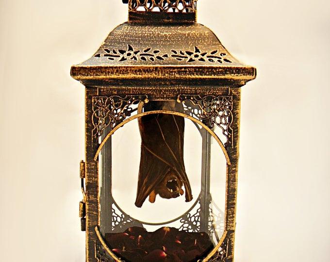 Hanging Bat Taxidermy Lantern (RED)
