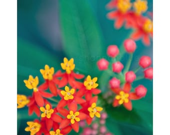 vibrant flower botanical photography / rainbow, floral, tropical, colorful, nature photography, emerald green, red, yellow / fireworks