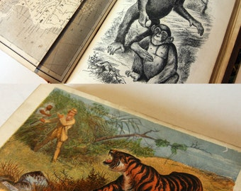 Wild Sports of the World illustrated colour 1862s Rare engravings antique Nature Book Science Geography gift book
