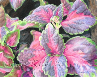 PURPLE FLOWERING PLANT by Carla Kurt Signed Print WWAO EBSQ