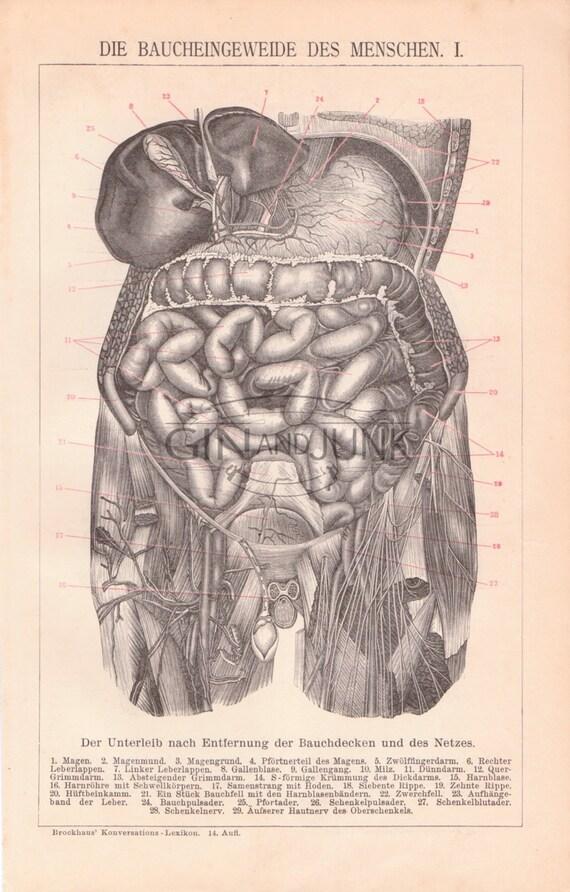 Impresión de anatomía antiguos los pulmones corazón y el