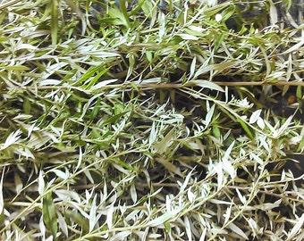 Dried Mugwort leaves, one ounce