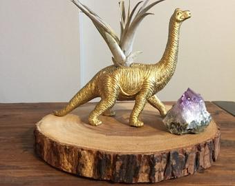 Gold dinosaur planter with air plant; desk planter; dino air plant holder