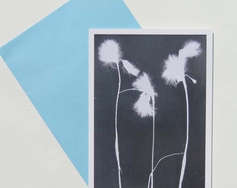 Pack of 6 blank art card greeting cards A6, Modern minimal botanical art from original print of Yorkshire Moors cottongrass FREE SHIPPING