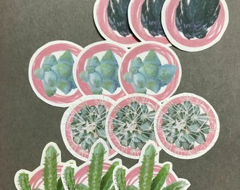 Individual Succulent stickers - Set of 3