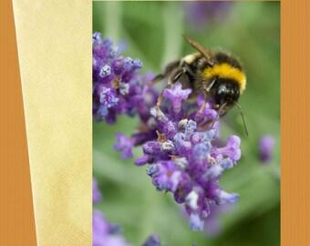 Bumbling among the lavender greeting card