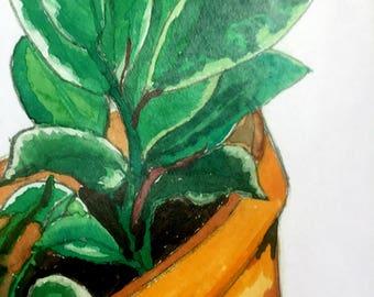 Ficus Benjamina in Terra Cotta