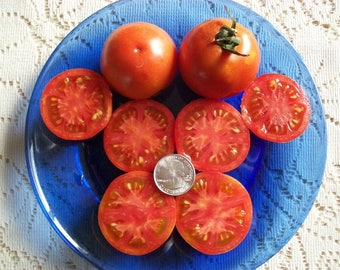 Heirloom Tomato- OREGON SPRING- 55 day red Determinate  25 seeds per pack