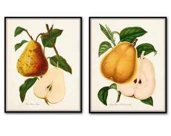 French Pears Botanical Print Set, Giclee, Antique Fruit Prints, Wall Art, Prints and Posters, Illustration, Vintage Botanical, Kitchen Art