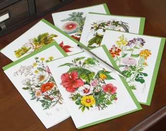 Frameable 5x7 Greeting Card Set with Elizabeth Twining floral artwork (6 Card Set with colored envelopes)