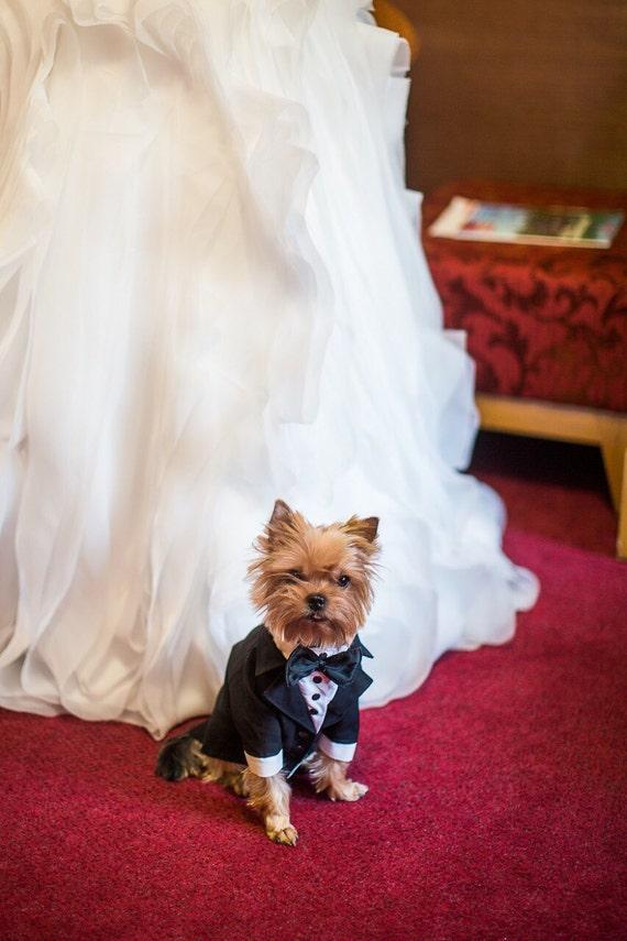 chien tenue formelle costume de mariage pour chien avec tenue. Black Bedroom Furniture Sets. Home Design Ideas