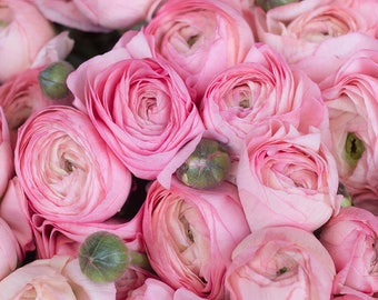 "Paris Photography , Romantic ""Pink Ranunculus"" for sale in Paris, France, nature decor, baby pink, paris pink wall art, french decor"