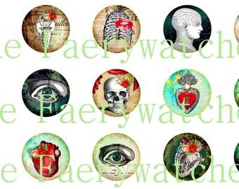 One Inch Anatomy Pins, Anatomy Magnets, Anatomy Flatbacks, Roses and Anatomy, 12 ct.