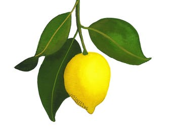 Almost Lemonade // Fine Art Print