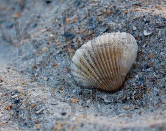 Digital Photo Download - Wrightsville Beach, NC Sea Shell