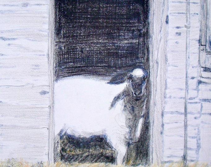 "Notecards of ""Sheep in Doorway"""