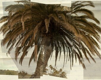 California beach wall art 8x10 - Palm tree collage - Natural beige cream olive green - Beach house photograph cottage wall decor  - Neutral